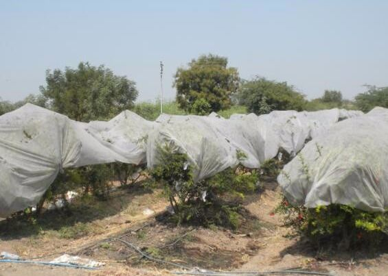 Anti UV PP Spunbonded Agriculture Non Woven Fabric For Plant Keeping Temperature